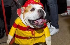 Nearest fire hydrant, please?
